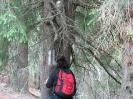 Marcare Albescu-Cioara-Culmea Leaotei